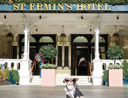 The St Ermin's Hotel welcomes Tinkerbelle the Dog for her 'royal' London visit…